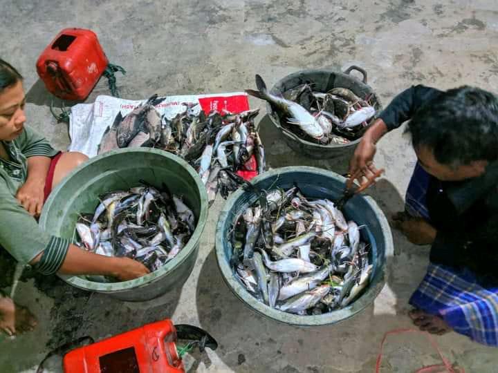 Pladu, Warga Sekitar Bendung Gerak Panen Ikan