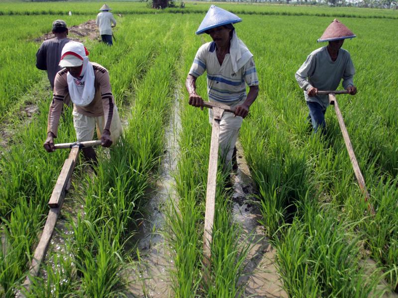 Dinas Pertanian Klaim Sudah Selesaikan 98% Program
