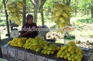 Segarnya Blimbing Ngringinrejo Bojonegoro, 3 Kg Cuma Rp.10 ribu