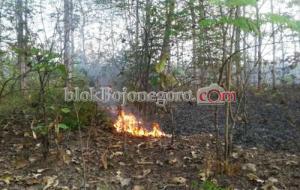 Antisipasi Kebakaran Hutan dan Lahan, Ini Instruksi Gubernur