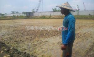 Petani Ngampel Keluhkan Pencemaran Limbah