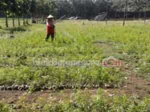 Selain Sendang Grogolan, Ada Wisata Pembibitan Pohon di Ngunut