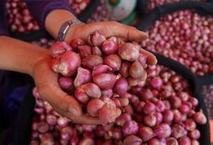 Harga Bawang Merah Dua kali Lipat Dari Petani