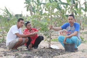 Hijaukan Desa dengan Tanaman Bermanfaat