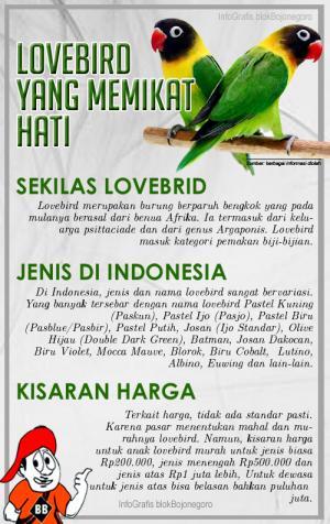Dari 3 Pasang Lovebird, Tembus Pasar Jakarta