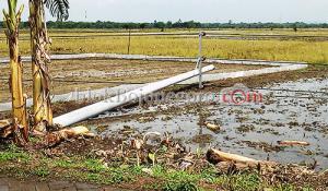 PLN: Penyebab 14 Tiang Listrik Roboh Karena Tanah Labil